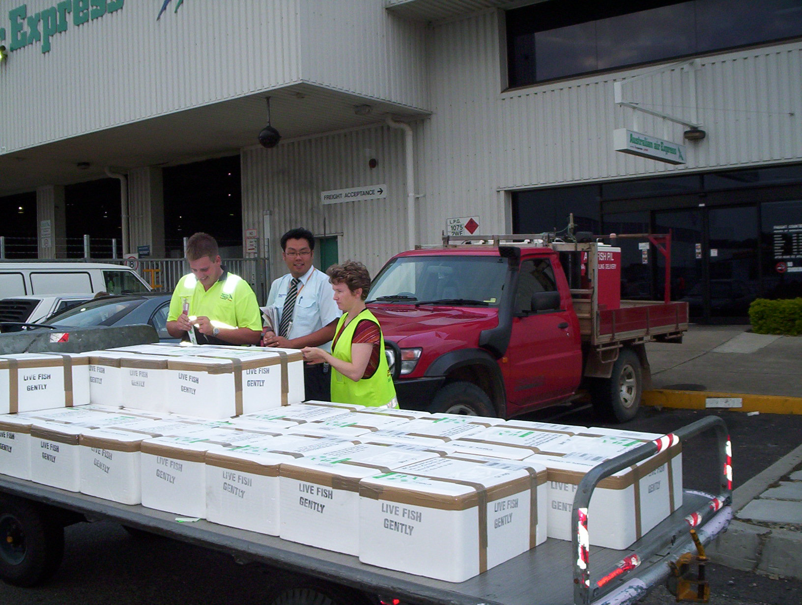 A shipment of Australian JADE perch fry at Queenslands Brisbane Airport